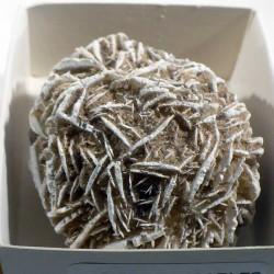 Rose des sables du Mexique - boite de collection 5cm