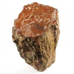 Tronc en bois fossile de Madagascar
