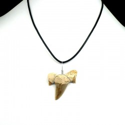 pendentif fossile dent de requin grande