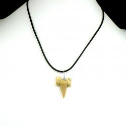 pendentif fossile dent de requin petite