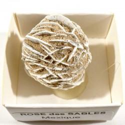 Rose des sables du Mexique - boite de collection 4cm