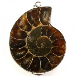 pendentif fossile en ammonite sertie