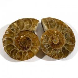 Ammonite sciée et polie de Madagascar