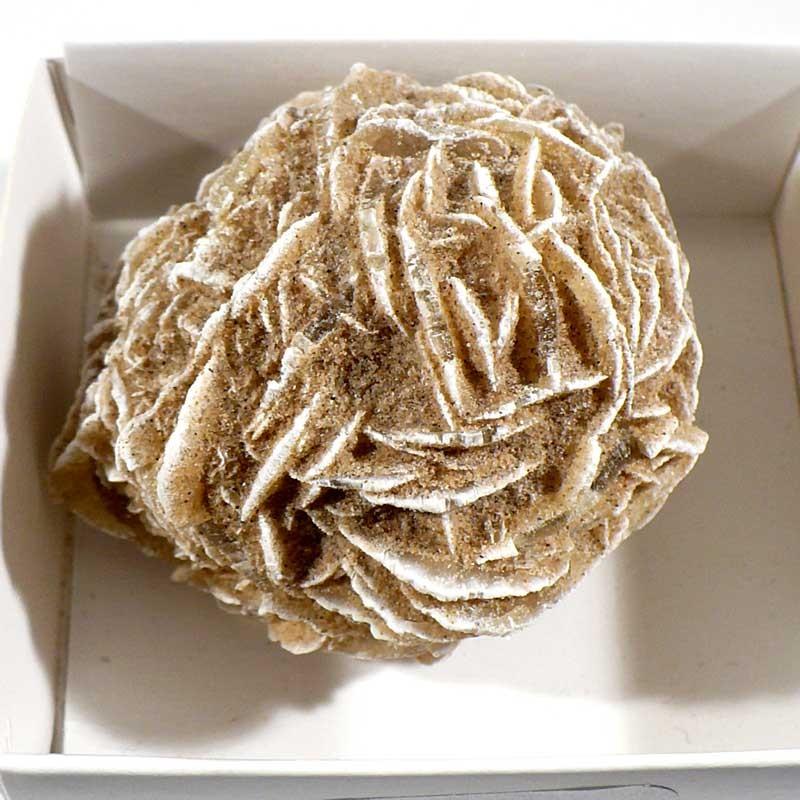 Rose des sables du Mexique - boite de collection 6cm